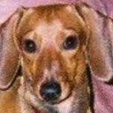 PETTYFAN's avatar