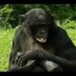 ovikk's avatar