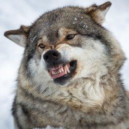tasdrodraet's avatar