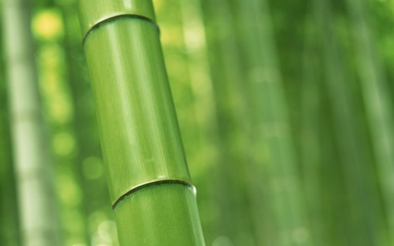 Perfect bamboo wallpaper