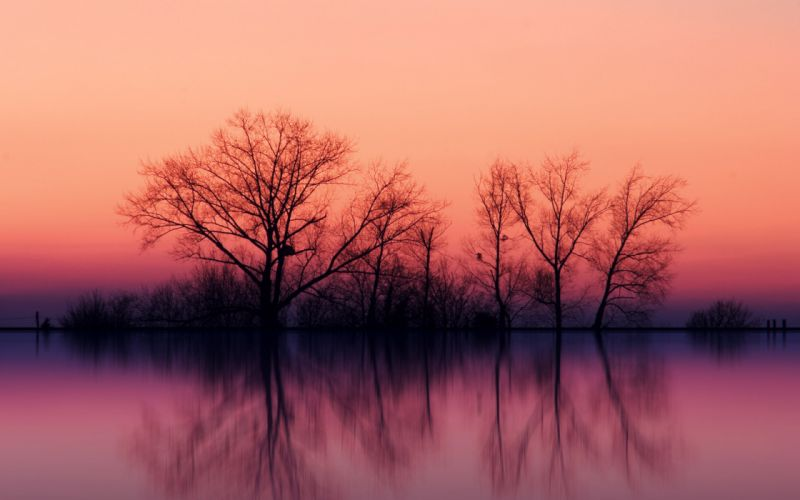 Trees at dusk wallpaper