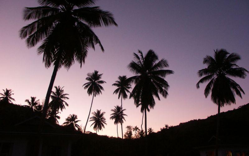 Twilight palms wallpaper