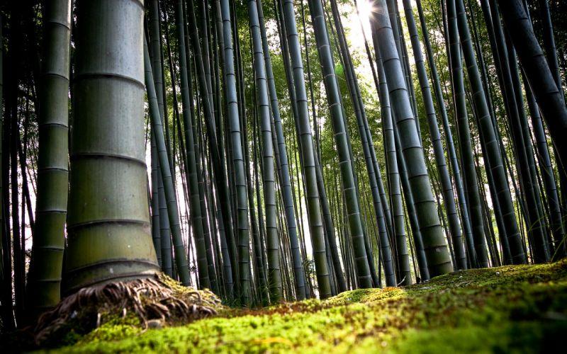 Bamboo forest wallpaper