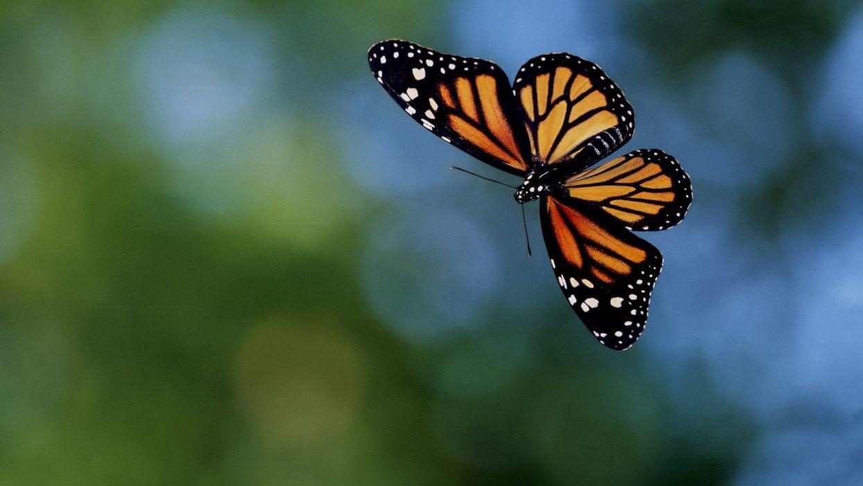 Happy butterfly wallpaper
