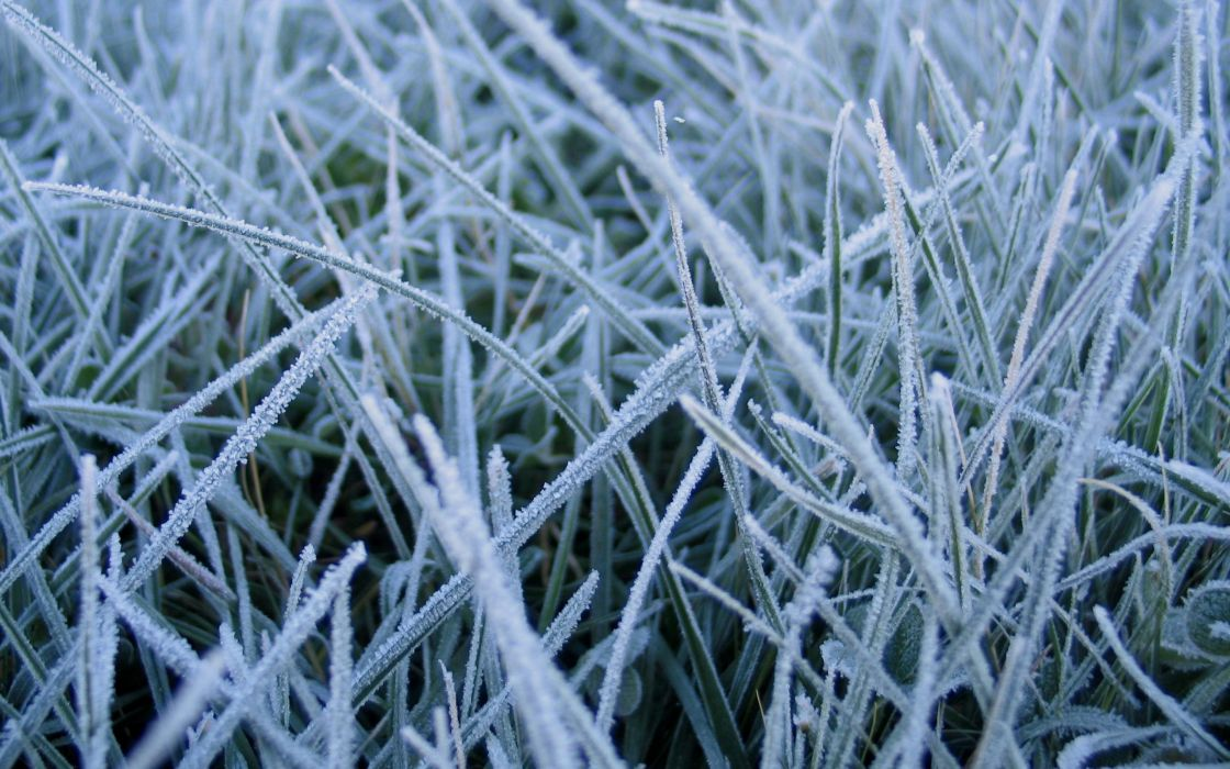 Frosted grass wallpaper