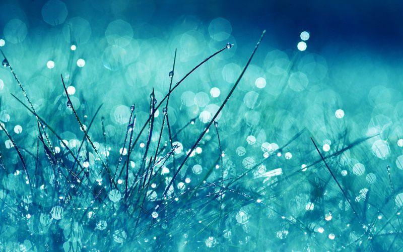 Grass after the rain wallpaper