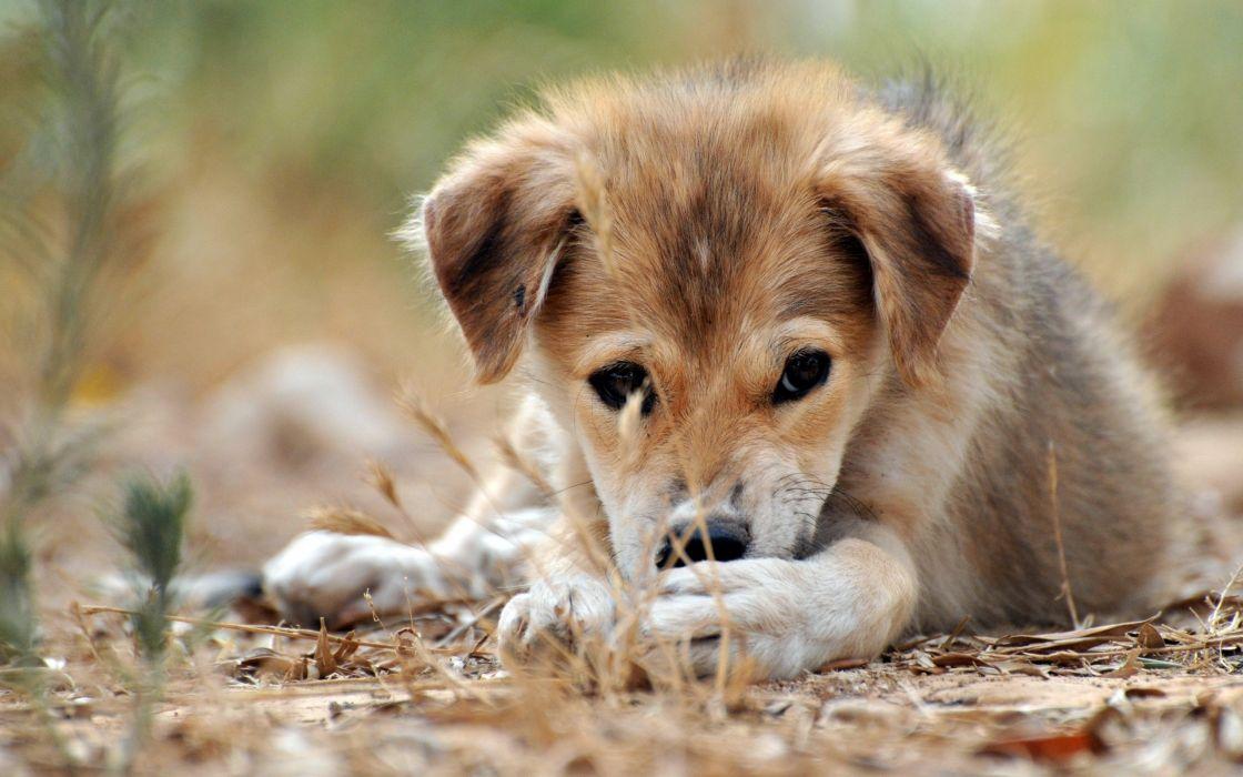 Shy dog wallpaper