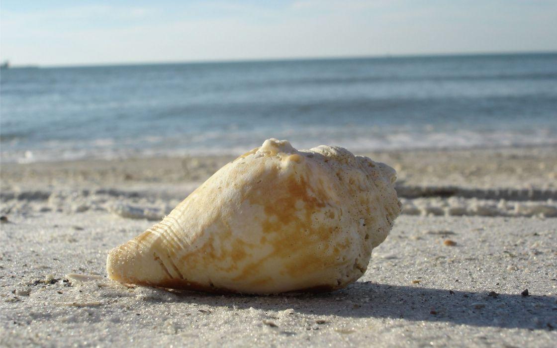 A clear water beach shell wallpaper