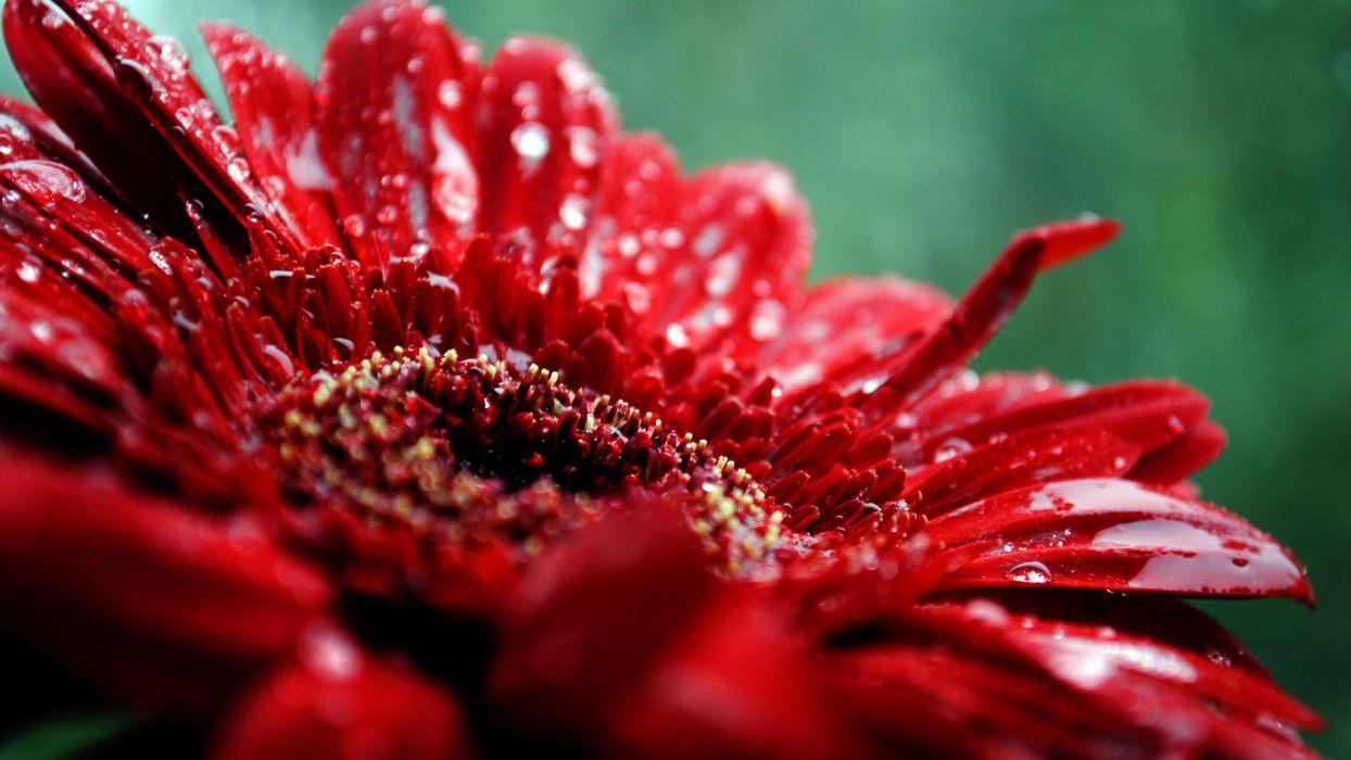 Beautiful red flower wallpaper 1920x1080 454 wallpaperup beautiful red flower wallpaper izmirmasajfo
