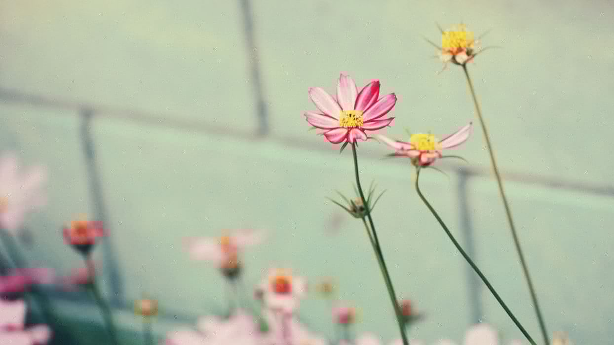 Little pink flowers wallpaper