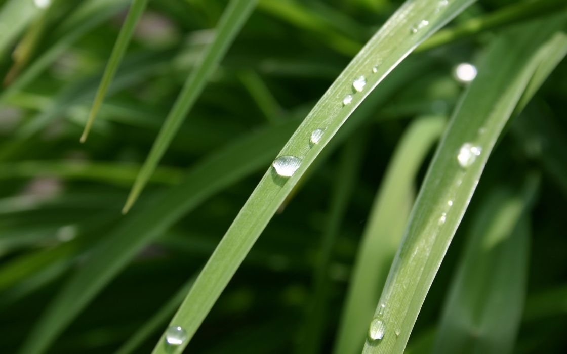 Dew drop wallpaper