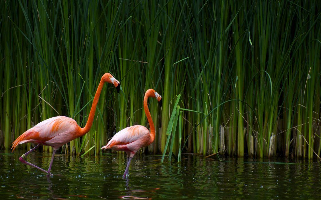 Freddie Loves Flamingo Wallpaper Freddie