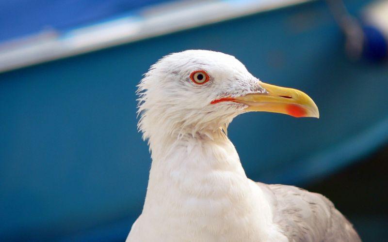 Seagull in venice wallpaper