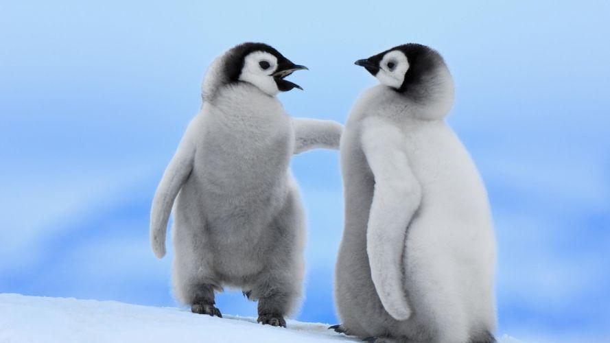 Two penguins wallpaper