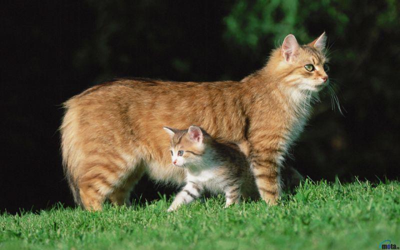 Cats family wallpaper