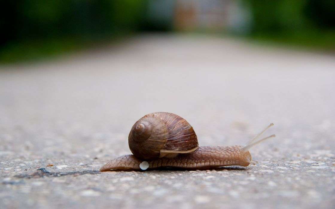 Snail crossing the street wallpaper