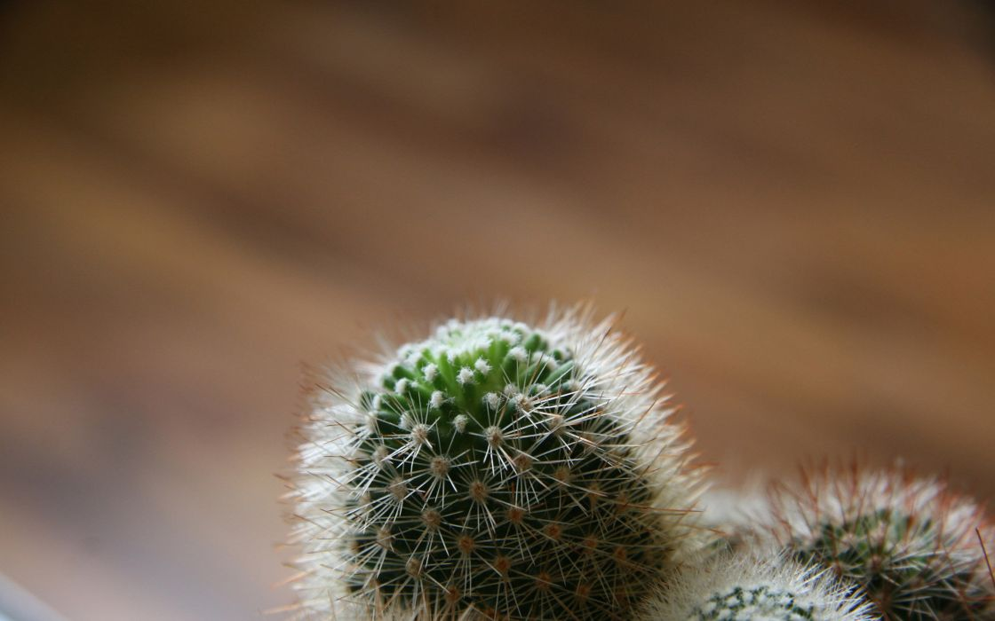 Little cactus wallpaper