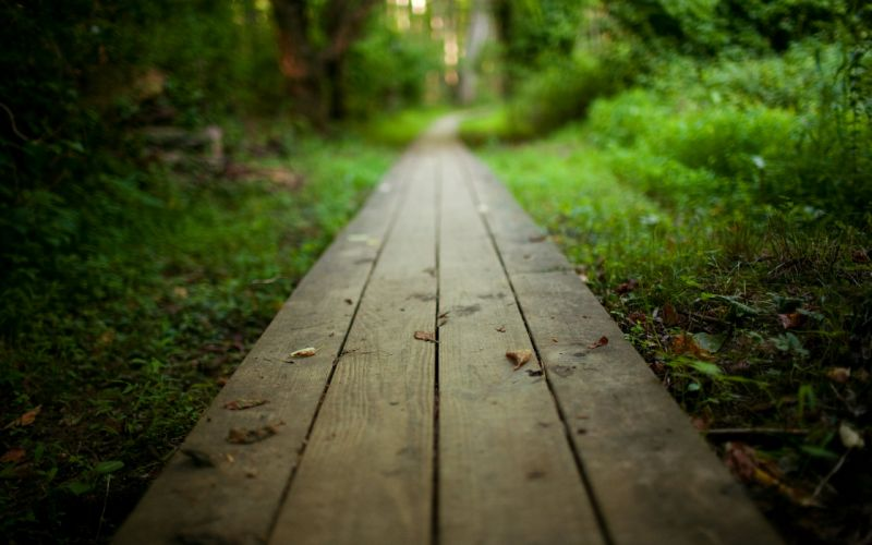 Way to the nature wallpaper