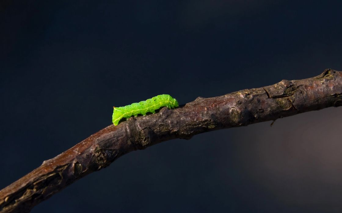 Caterpillar on a trunk wallpaper