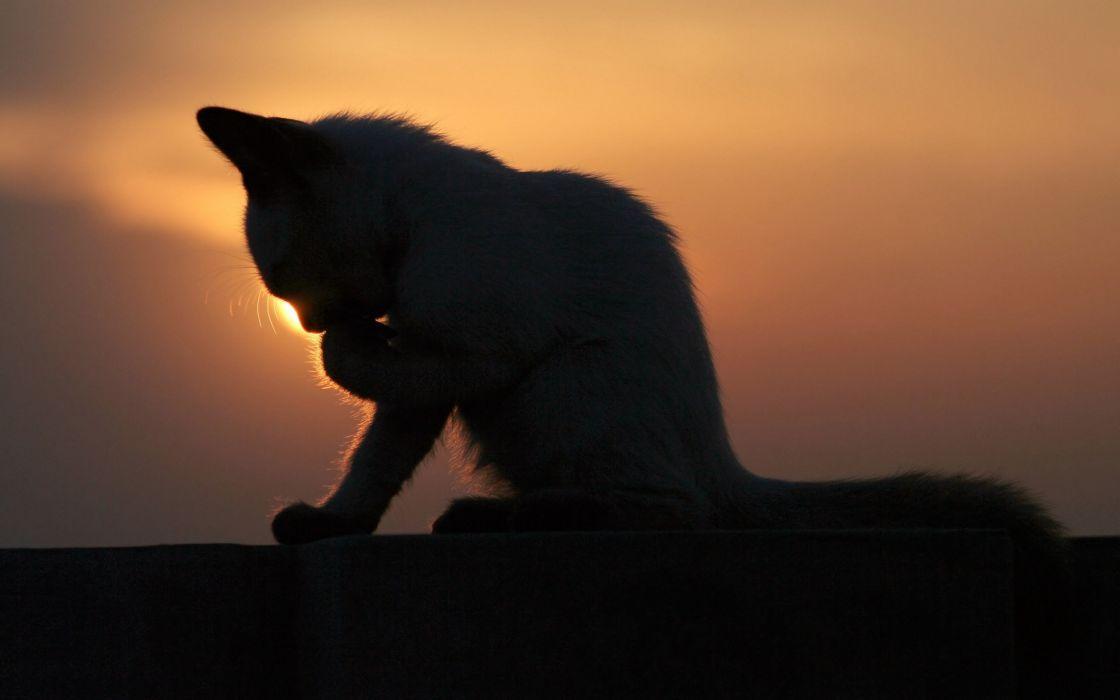Cat of darkness wallpaper