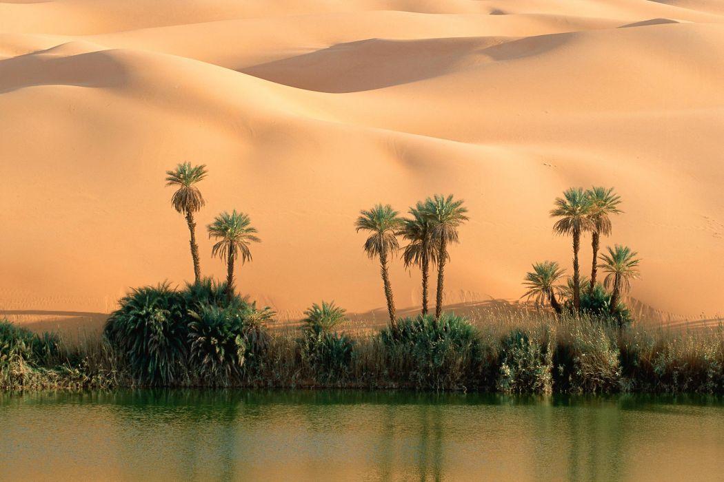 Desert oasis wallpaper