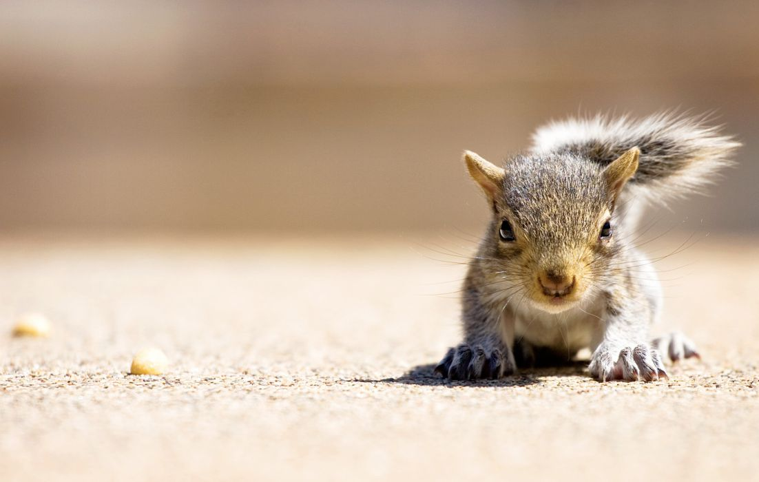 hungry squirrel wallpaper