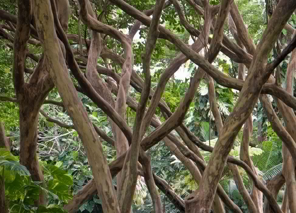Branches intertwined wallpaper