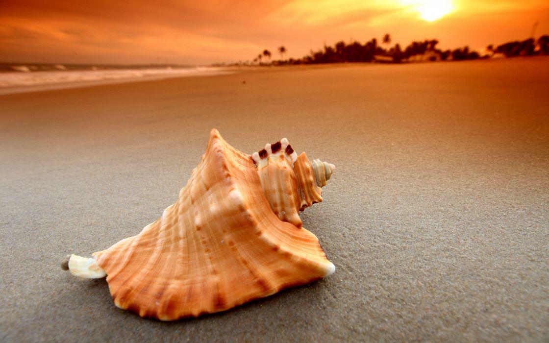 Shell over a beach wallpaper