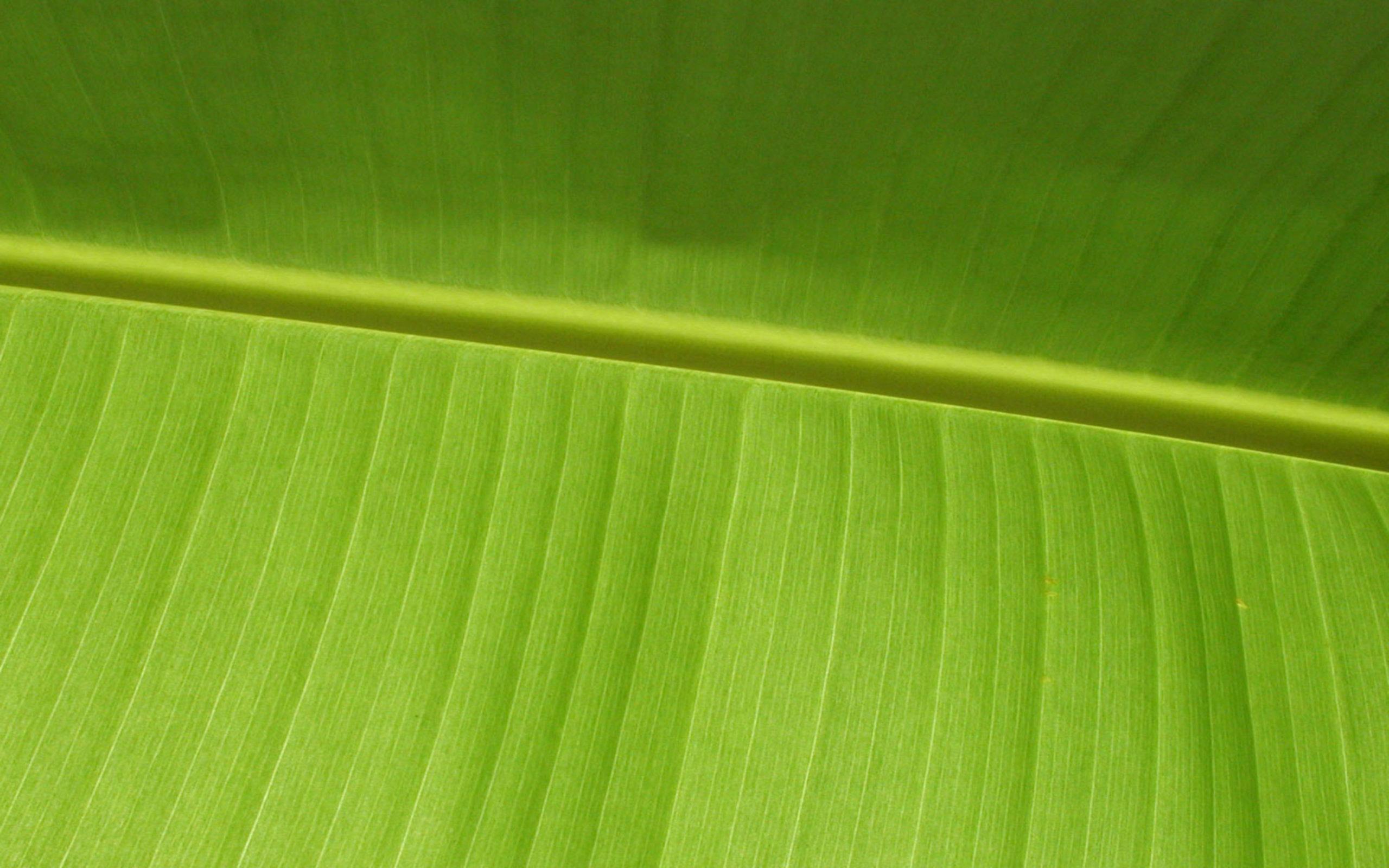banana leaves wallpaper