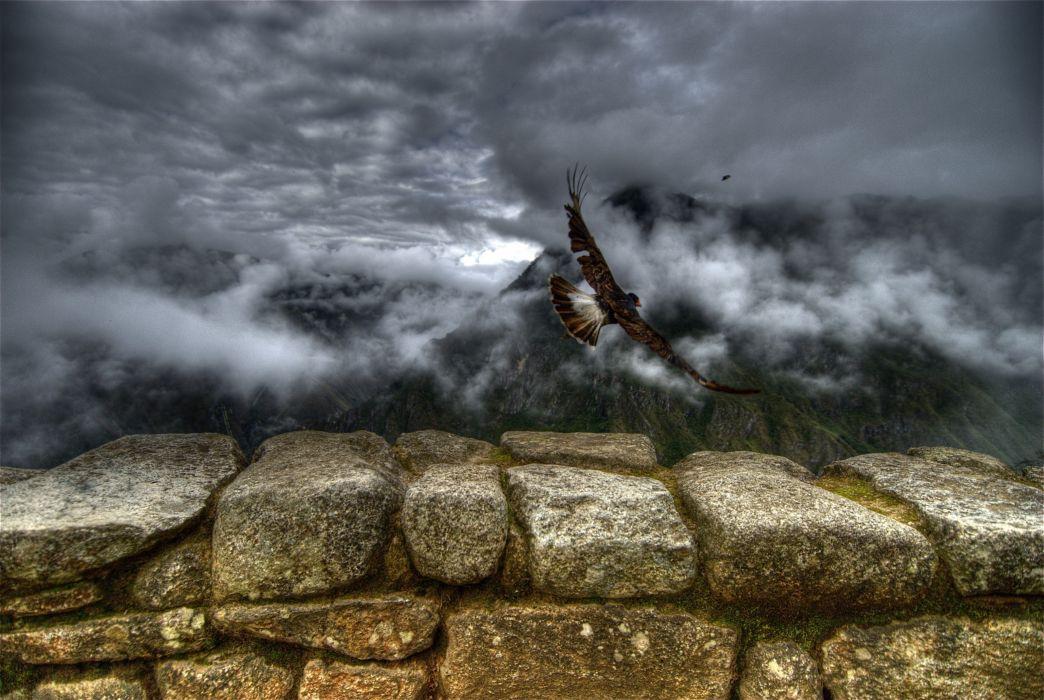 Flight freedom wallpaper