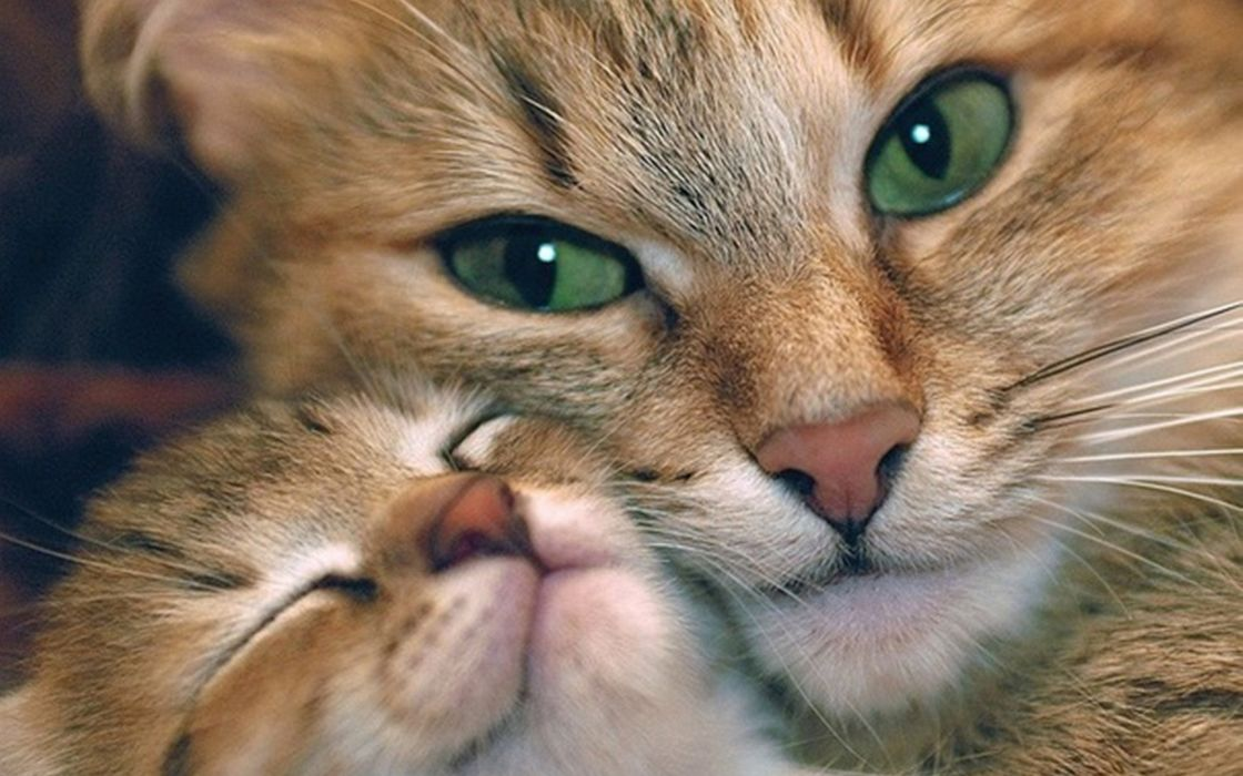 Cuddle cat wallpaper