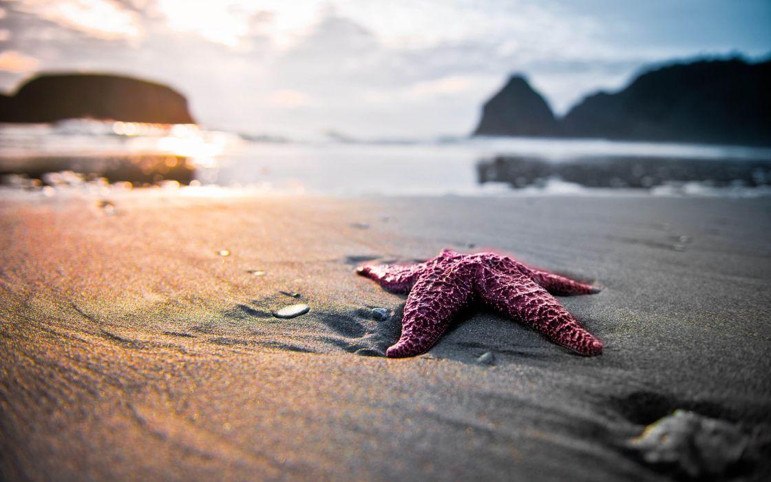 Lilac starfish wallpaper