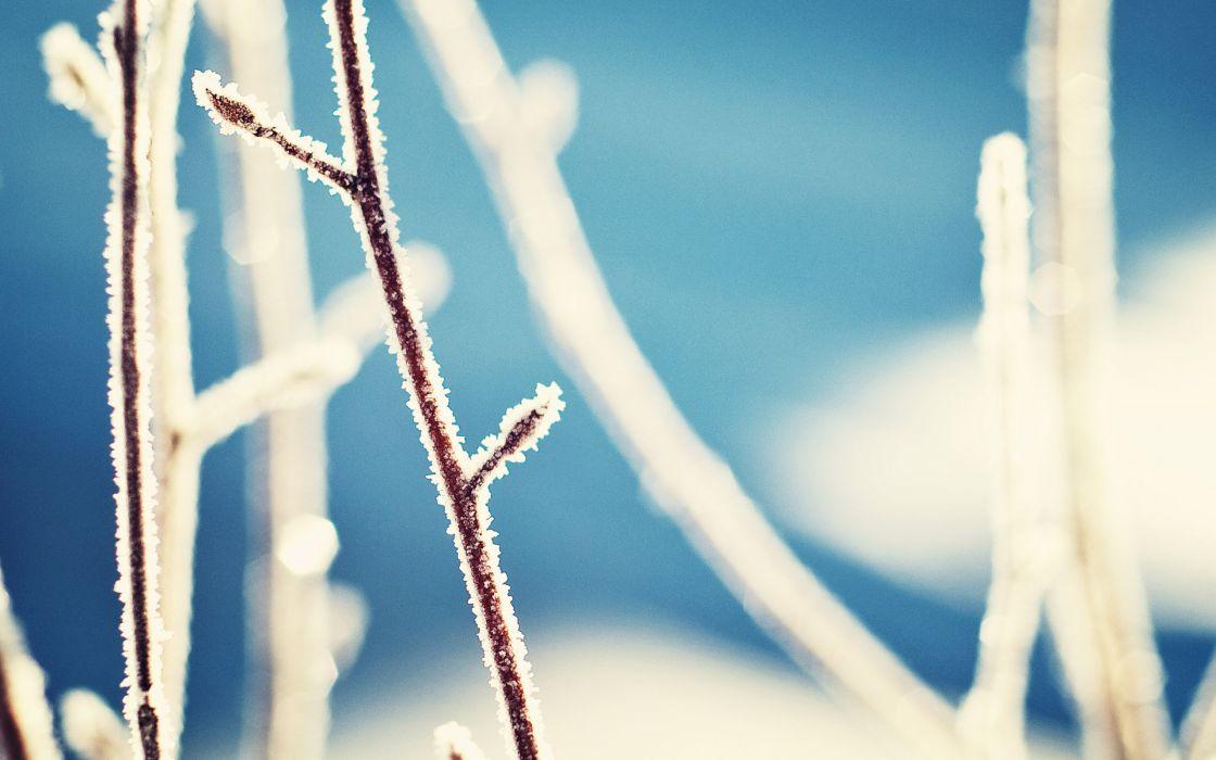 Frost in detail wallpaper