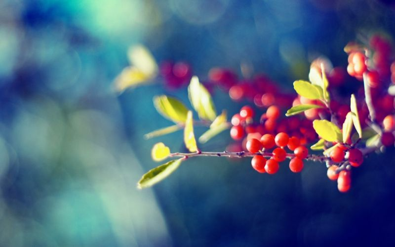 Harmonious berries wallpaper