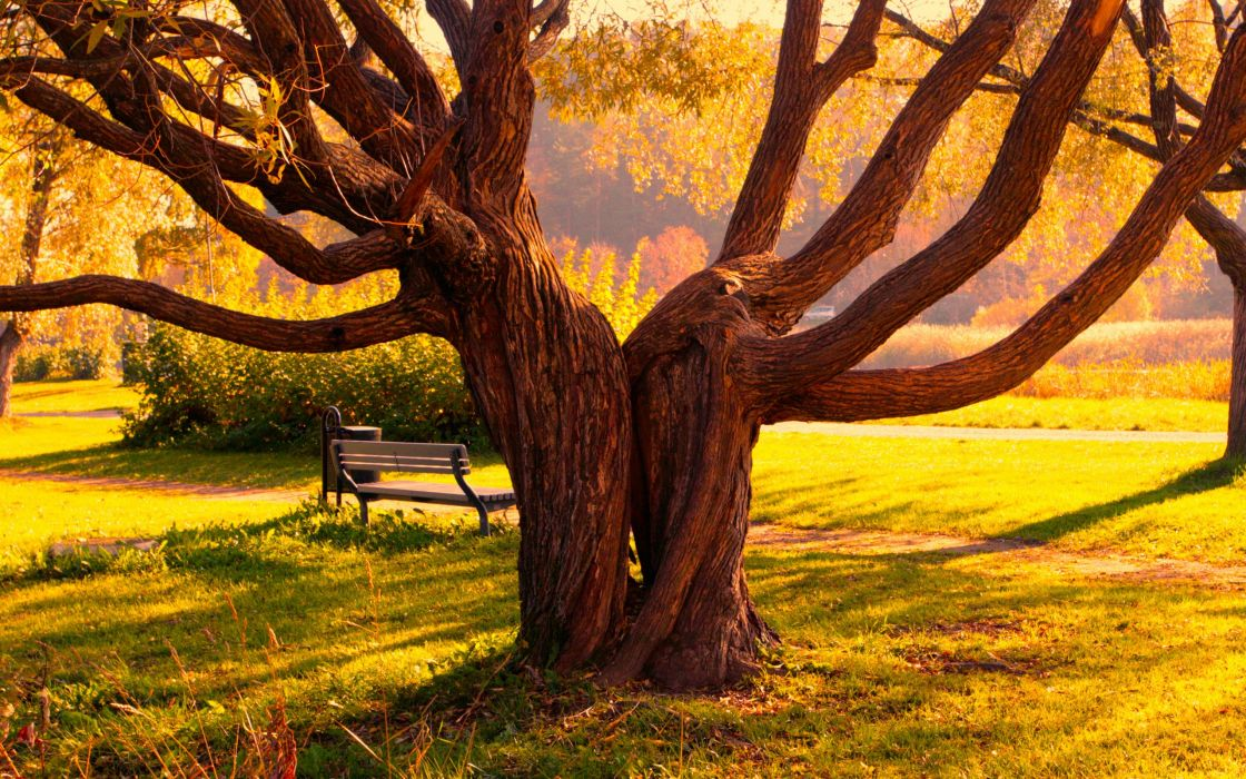 Trees twins wallpaper