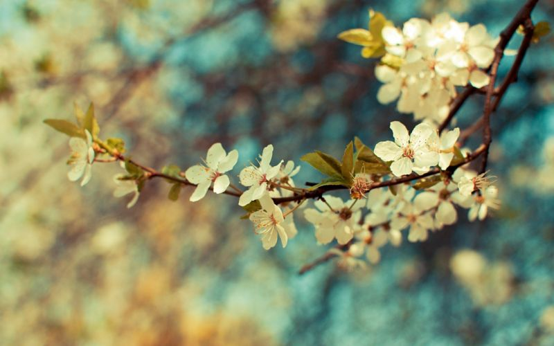 Wonderful flowers wallpaper