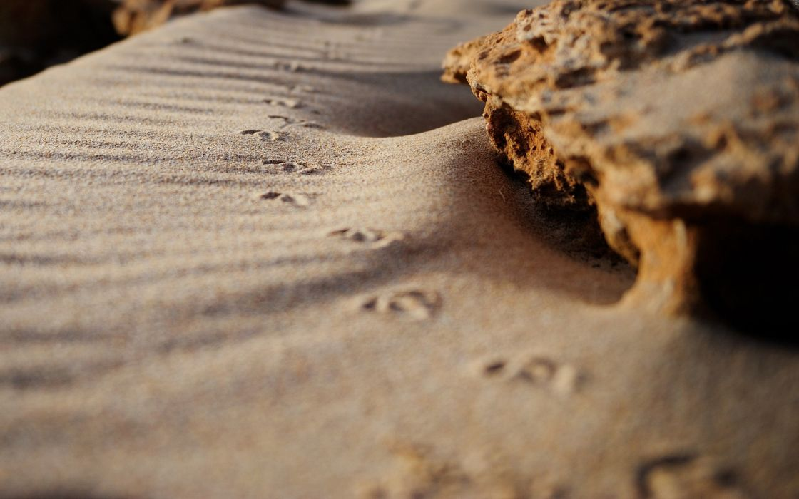 Footprints in the sand wallpaper