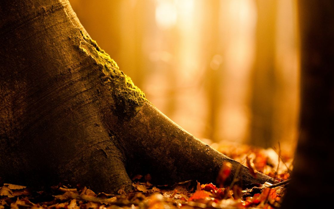 Autumnal tree roots wallpaper