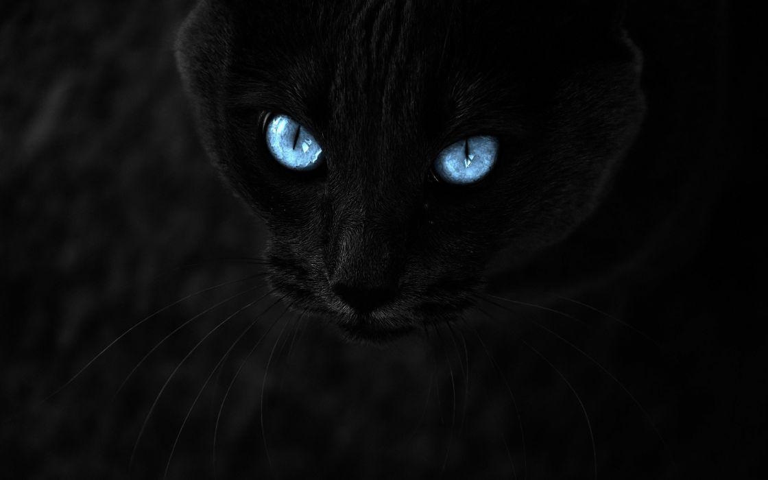 Blue eyes in the night wallpaper