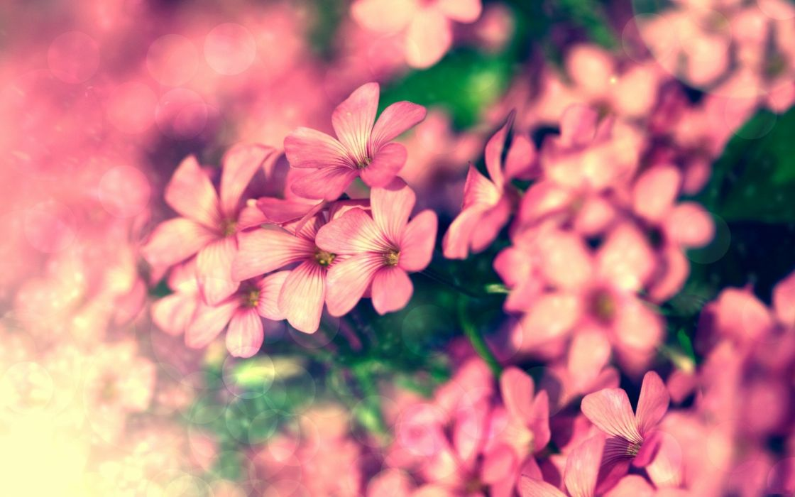 Tiny pink flowers wallpaper