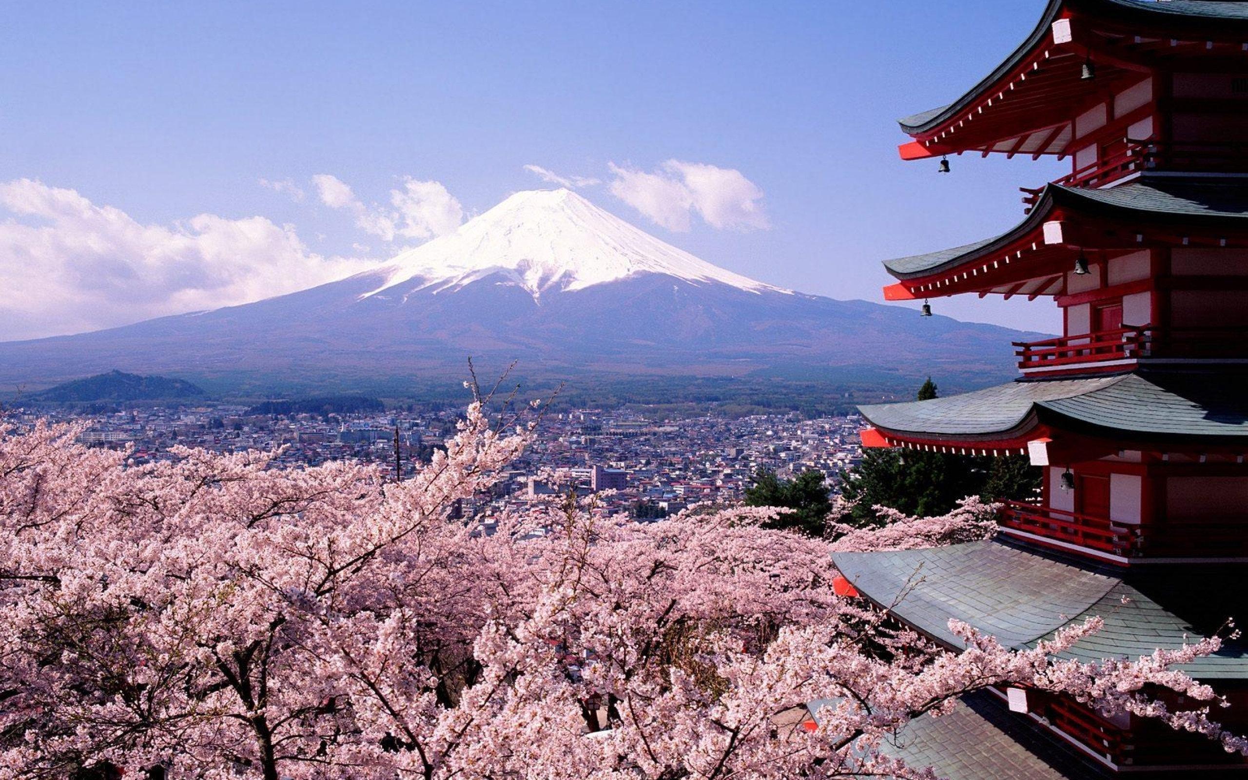 cherry blossoms and mount fuji japan wallpaper 2560x1600 987 wallpaperup. Black Bedroom Furniture Sets. Home Design Ideas