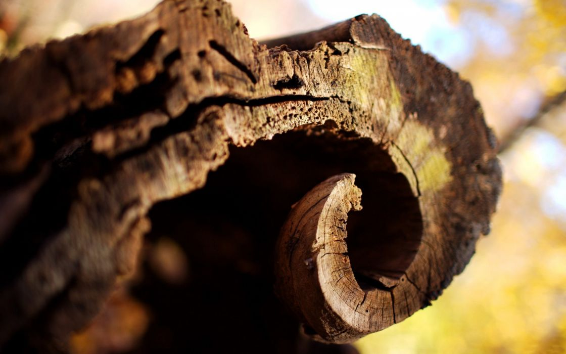 Bark of tree wallpaper