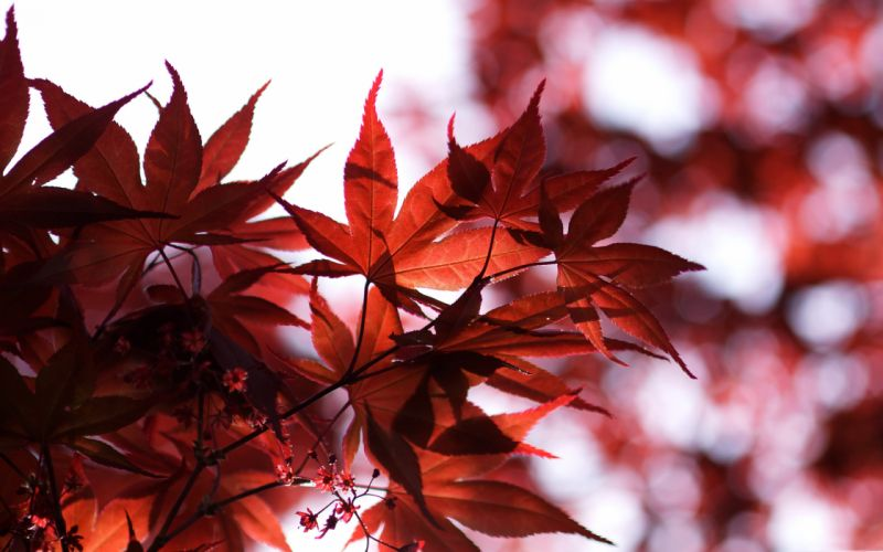 Spring red wallpaper