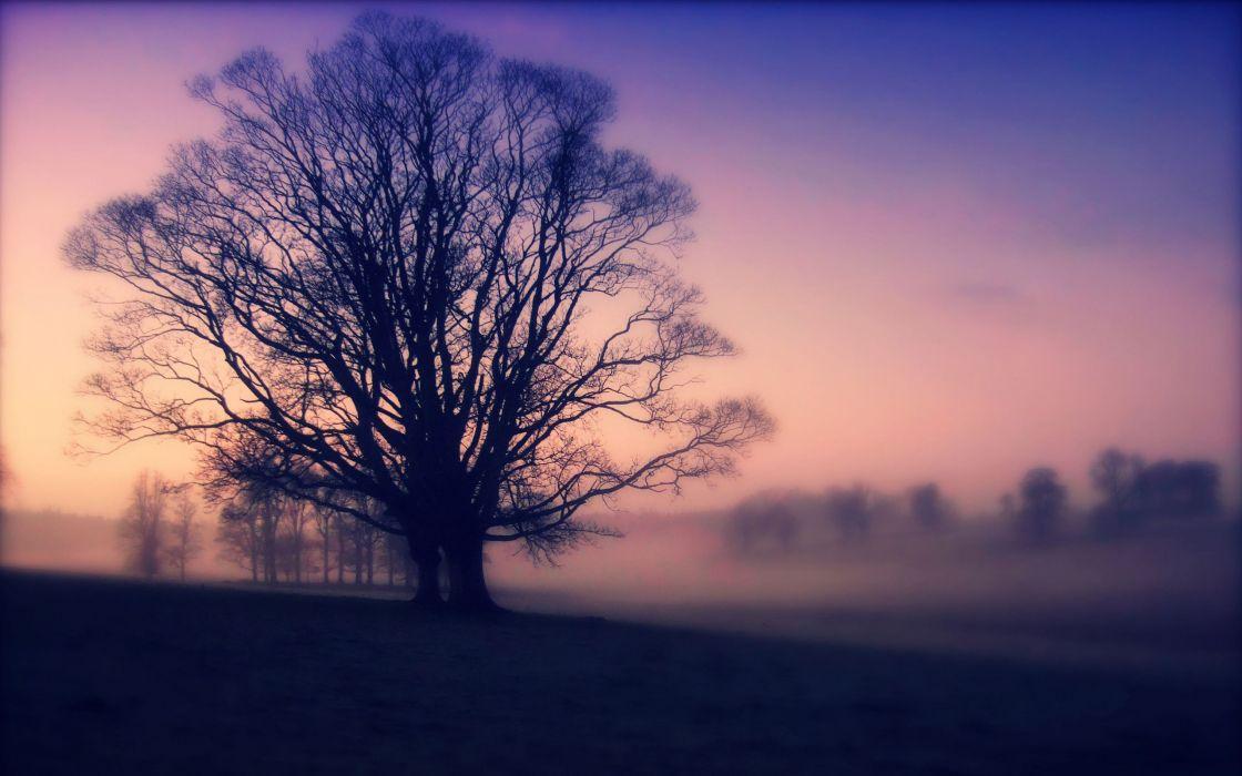 Scots mist wallpaper