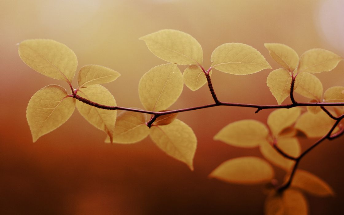 Leaves of a branch wallpaper