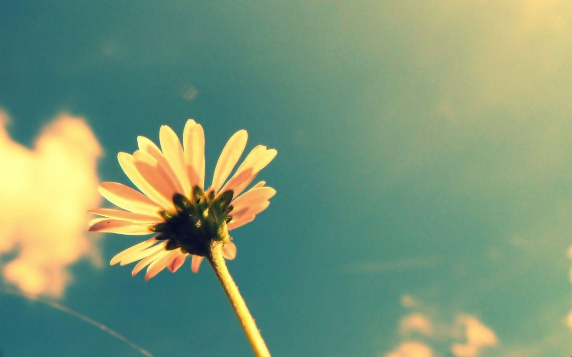 Summer flower retro wallpaper