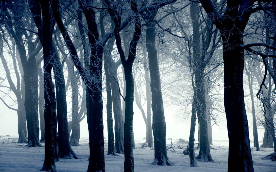White forest wallpaper