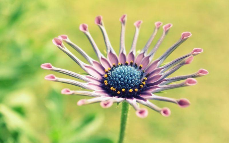 Delicate purple flower wallpaper