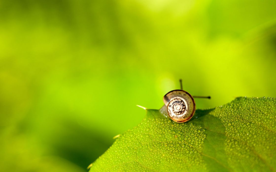 Snail on green leaf wallpaper