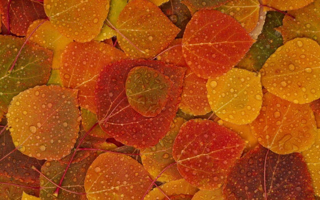 Fall leaves wallpaper
